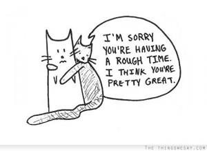 apology-cat